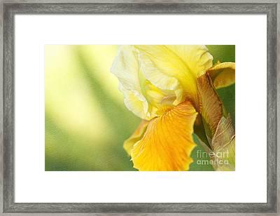 Lemon Lime Framed Print by Beve Brown-Clark Photography