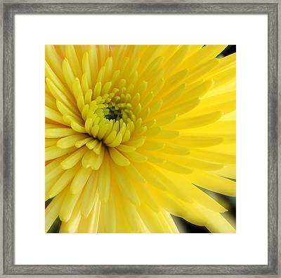 Lemon Mum Framed Print