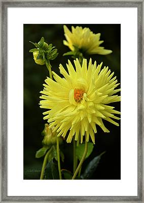 Lemon Tart Dahlia Framed Print by Julie Palencia