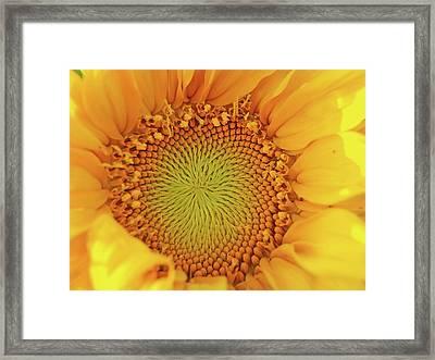 Lemon Framed Print by Tom Druin