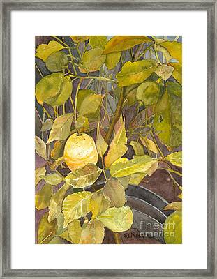 Lemon Tree Framed Print by Sandy Linden
