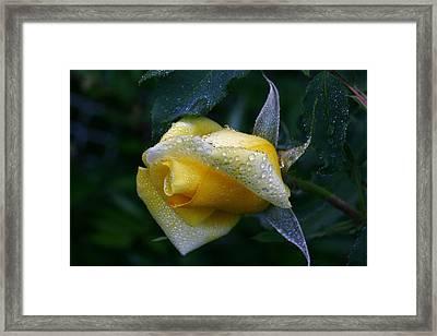 Framed Print featuring the photograph Lemonaid by Doug Norkum