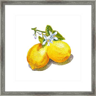 Lemons And Blossoms Framed Print by Irina Sztukowski