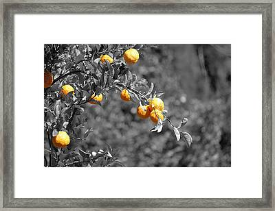 Lemons Framed Print by Chris Whittle