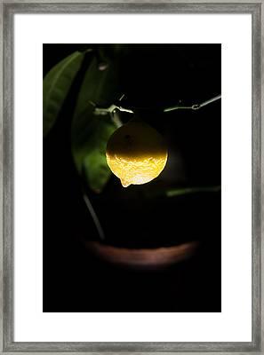 Lemon's Planet Framed Print