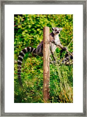 Lemur In The Green Framed Print