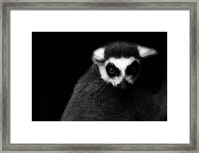 Lemur Framed Print by Martin Newman