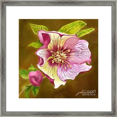 Lenten Rose Framed Print by Joan A Hamilton