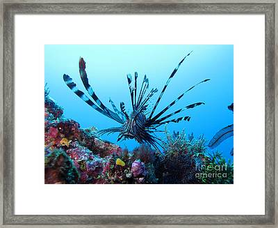 Leon Fish Framed Print by Sergey Lukashin