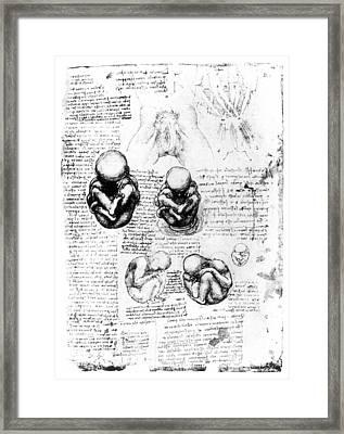 Leonardo: Anatomy Framed Print by Granger