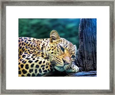 Framed Print featuring the photograph Leopard 1 by Dawn Eshelman