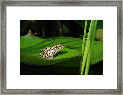Leopard And Lily Framed Print