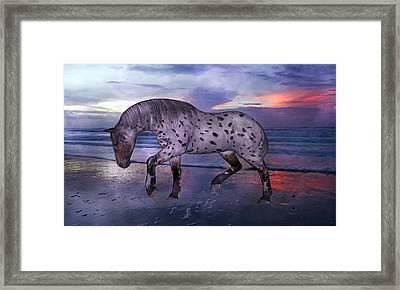 Leopard Appaloosa Framed Print