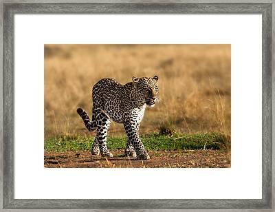 Leopard Binti Masai Mara Framed Print by Maggy Meyer