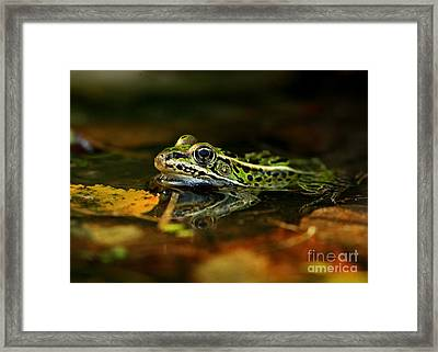 Leopard Frog Floating On Autumn Leaves Framed Print by Inspired Nature Photography Fine Art Photography
