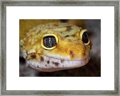 Leopard Gecko Close-up Full Face Framed Print