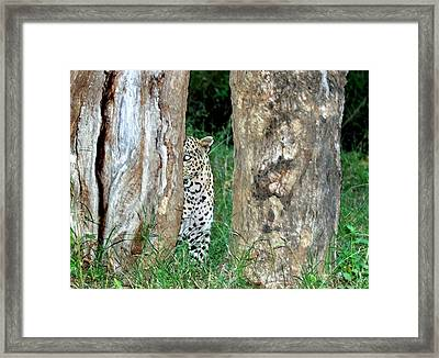 Leopard Hiding Amongst Trees Framed Print by K Jayaram