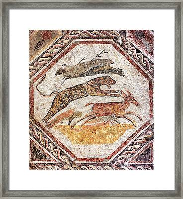 Leopard Hunting Deer Framed Print by Sheila Terry