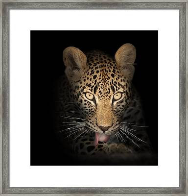 Leopard In The Dark Framed Print by Johan Swanepoel