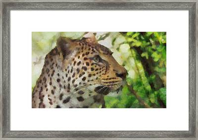 Leopard In The Wild Framed Print by Dan Sproul