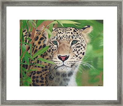 Leopard In The Woods Framed Print by Alina Kaplanov