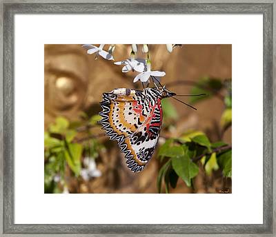 Leopard Lacewing Butterfly Dthu619 Framed Print by Gerry Gantt