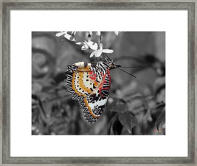 Framed Print featuring the photograph Leopard Lacewing Butterfly Dthu619bw by Gerry Gantt