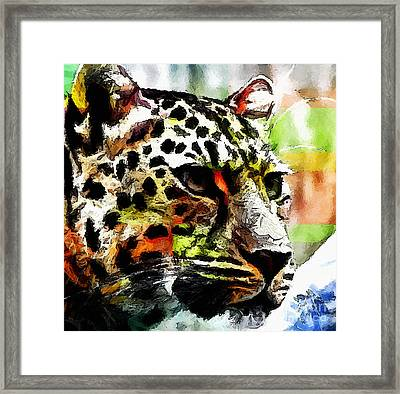 Framed Print featuring the painting Leopard - Leopardo by Zedi