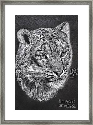 Adams Leopard - Pastel Framed Print