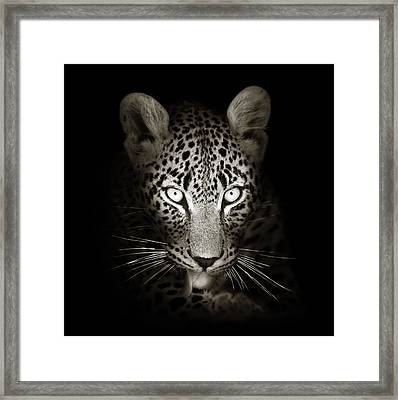 Leopard Portrait In The Dark Framed Print