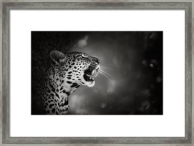 Leopard Portrait Framed Print by Johan Swanepoel