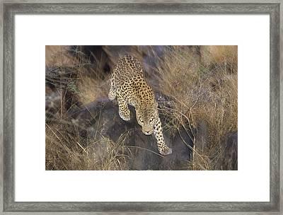Leopard Running At Dusk Etosha Np Framed Print by Konrad Wothe