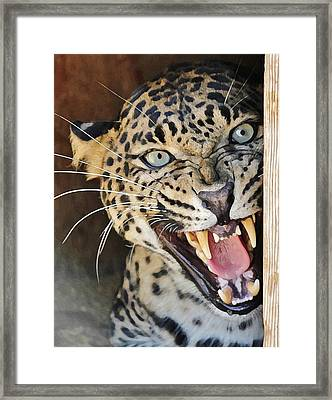 Leopard Snarling Framed Print