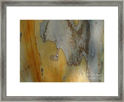 Leopard Tree Bark Abstract No.3 Framed Print by Denise Clark