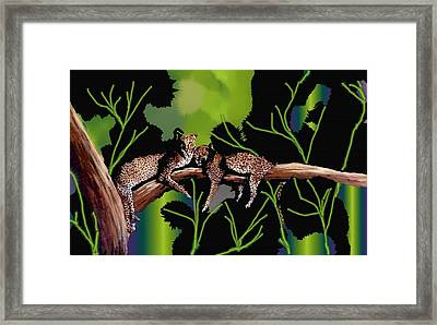 Leopards Framed Print by Claire Masters