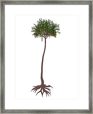 Lepidodendron Prehistoric Tree Framed Print by Elena Duvernay