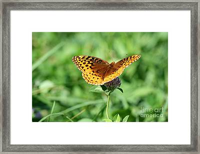 Lepidoptera Pollinating Cowgrass Framed Print by Neal Eslinger