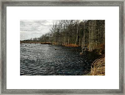 Leroy Swamps Framed Print by Rhonda Barrett