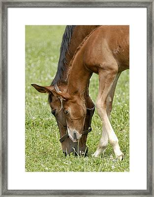 Framed Print featuring the photograph Lessons From Mom by Sami Martin