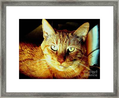 Lester The Molester Framed Print by Jodie  Scheller