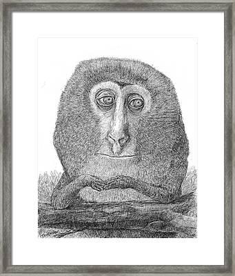 Lesula Framed Print