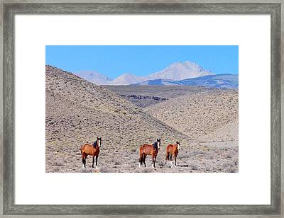 Framed Print featuring the photograph Let Freedom Ring by Marilyn Diaz