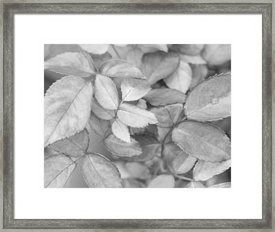 Framed Print featuring the photograph Let It Be by Heidi Smith