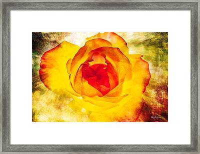 Floral - Rose - Let It Shine Framed Print by Barry Jones