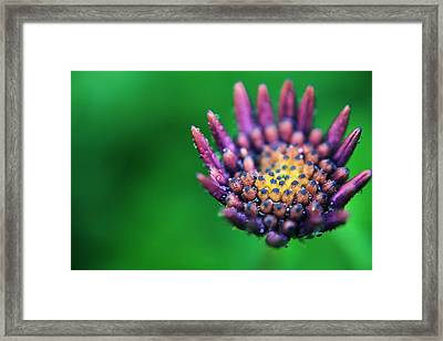 Let Love Grow Framed Print