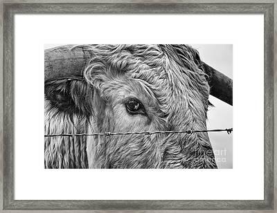 Let Me Go Free Framed Print by John Farnan