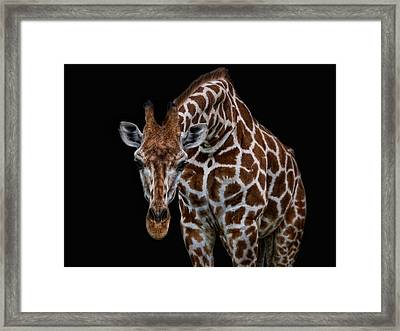 Let Me Have A Look Framed Print by Joachim G Pinkawa