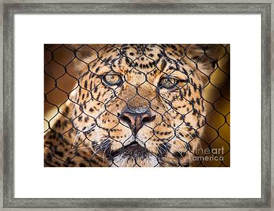Let Me Out Framed Print by John Wadleigh