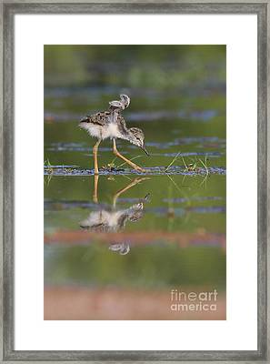 Let Me See Your Wings Framed Print