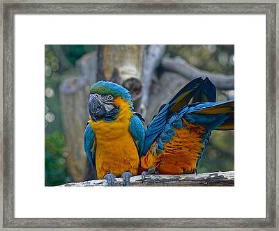 Let Me Show You My Scar.... Framed Print by Colleen Renshaw